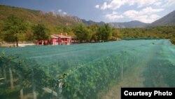 Plasă antigrindină la o vinărie, afacere de familie, în Muntenegru