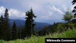Последний раз инвентаризация леса в Боржоми-Бакуриани проводилась в 1998 году. Сейчас, спустя почти двадцать лет, эксперты не досчитались более двух миллионов деревьев