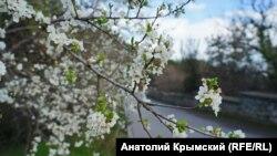 Поселок Никита, Крым, марта 2018 год