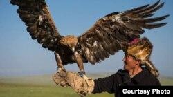 Живущий в Баян-Улгийском районе Монголии казах с ловчей птицей. Фото Баяра Балганцэрэна.