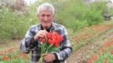 Georgia -- Kako Jeiranashvili, Flower plantation, village Kolagi, Kakheti region