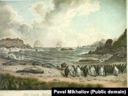 Каменистый пляж на острове Маккуори, к югу от Новой Зеландии, населенный пингвинами и тюленями.