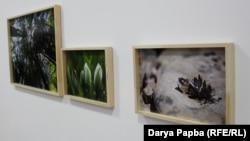 Фотографии Тенгиза Тарба