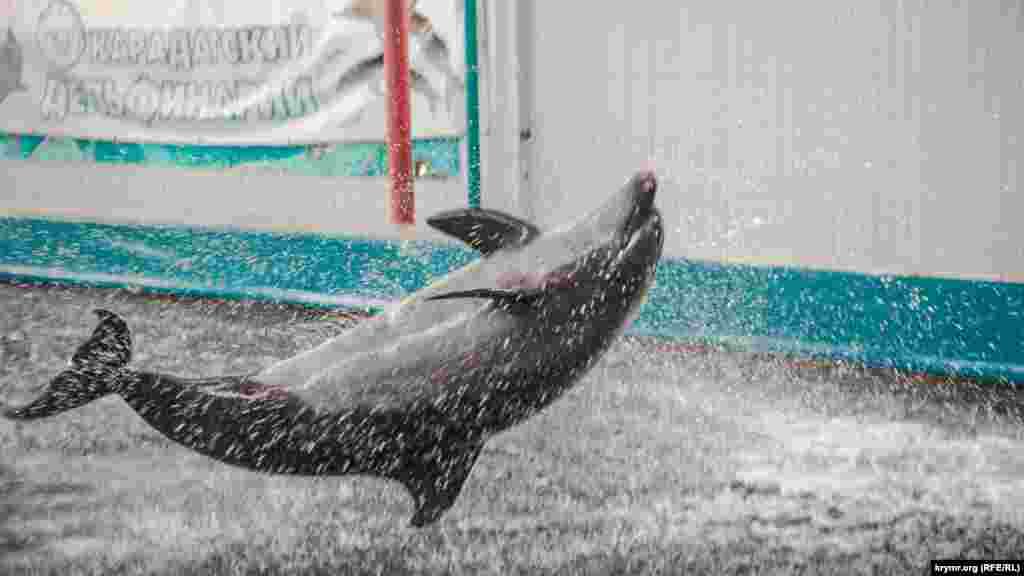 Яша живет в дельфинарии последние 30 лет