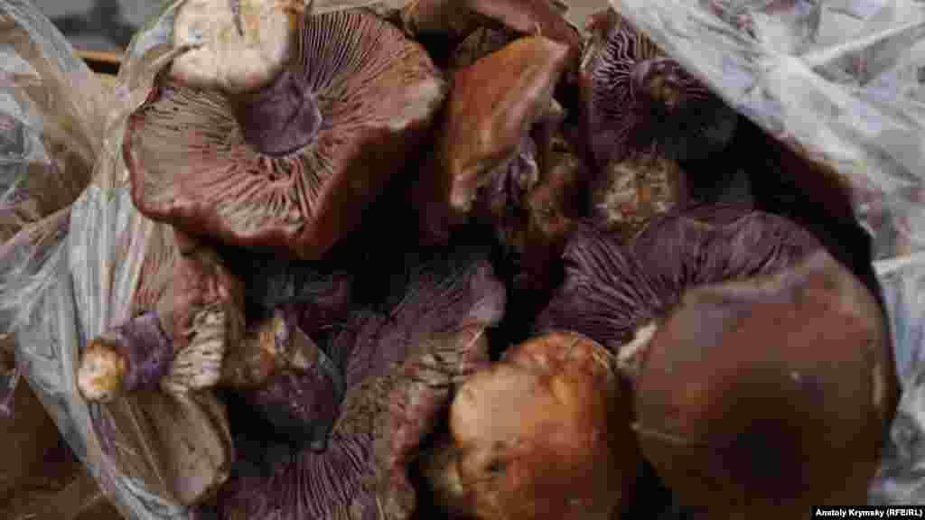 Рядовку фіолетову з Верхньосадового продавали минулими вихідними біля одного з Сімферопольських ринків
