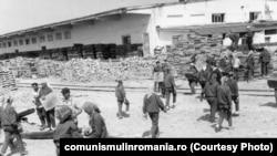 """Uteciști din Târgu Jiu la muncă patriotică. Mâna de lucru gratuită a tinerilor a fost esențială pentru așa-zisele succese în producție. La fel și munca """"patriotică"""" pe care erau forțați s-o presteze toți cetățenii valizi. Sursa:comunismulinromania.ro (MNIR)"""