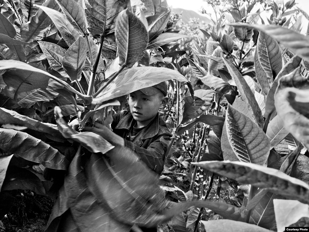 exploitation of child labor Labor exploitation and human rights abuses within the  exploitation of workers and a reliance on forced and child labor despite serious exploitation of .