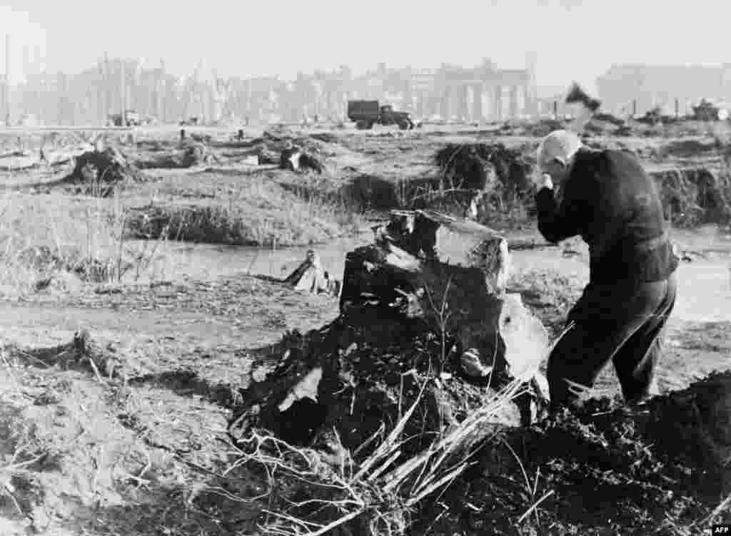 Човек цепи парчета дърво от пън на дървото в известния парк Тиргартен.