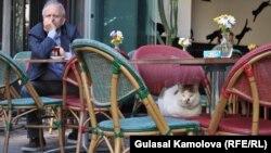 Кошки в Стамбуле чувствуют себя вольготно
