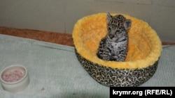 Архивное фото: ягуар Филя из ялтинского зоопарка «Сказка»