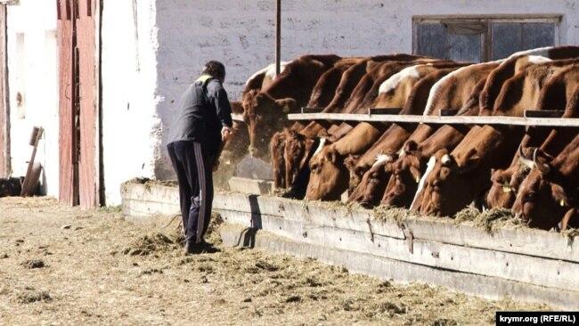 Поголовье скота на птицеводческом заводе имени Фрунзе