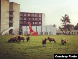 Лозаннский университет. Фото из личного архива Анны Переходы