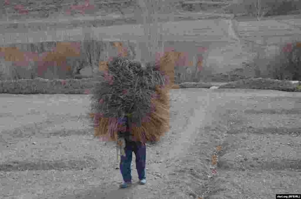 مردی که سوخت زمستان را جمع آوری می کند ولسوالی پنجاب