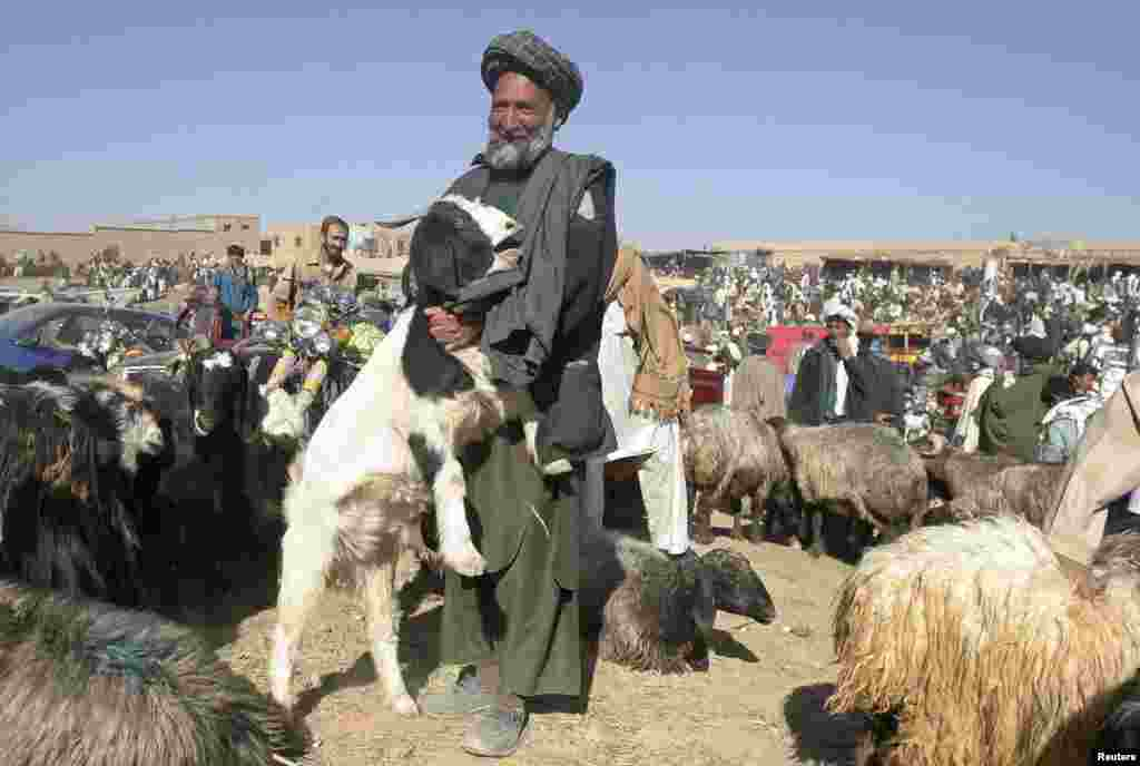 An Afghan vendor holds his goat as he waits for customers at a livestock market ahead of Eid al-Adha in Ghazni province.