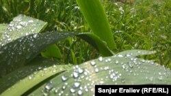 29 травня лише у південних областях без істотних опадів