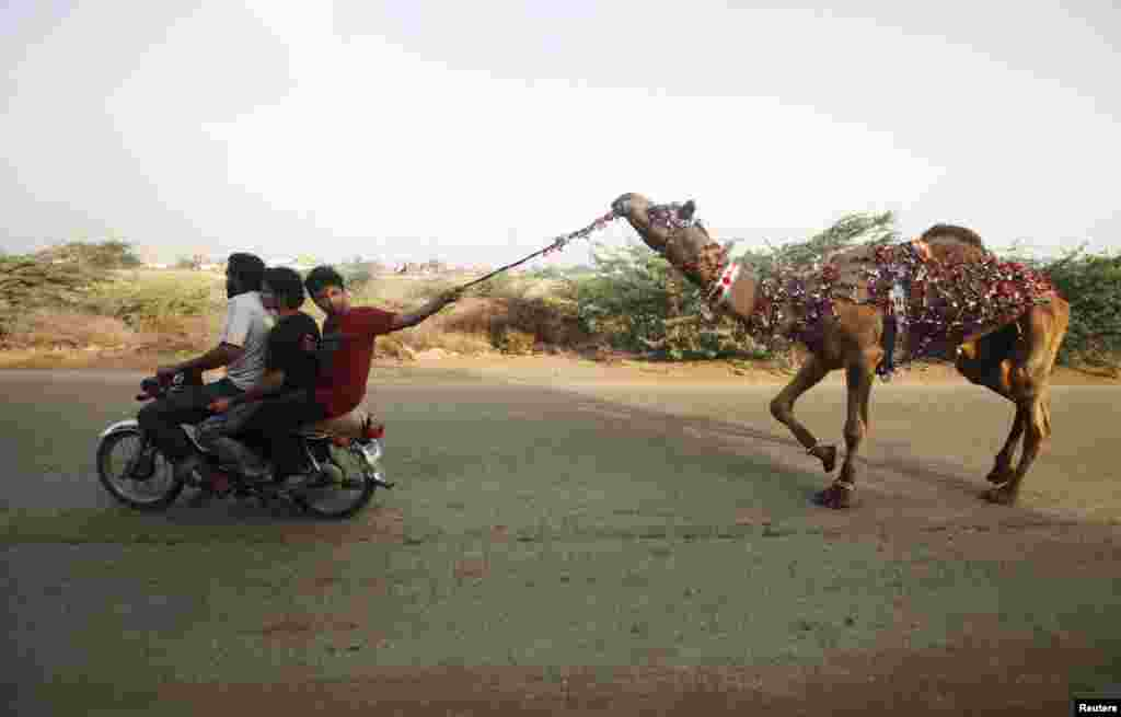Men ride on a motorcycle while leading a recently purchased camel ahead of Eid al-Adha celebrations on the outskirts of Karachi, Pakistan. (Reuters/Athar Hussain)