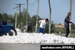 Дети на уборке хлопка в Туркменистане