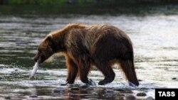 """При охоте на подчиненного лидер мурманской """"Единой России"""" продемонстрировал ловкость, свойственную символу партии при ловле рыбы"""