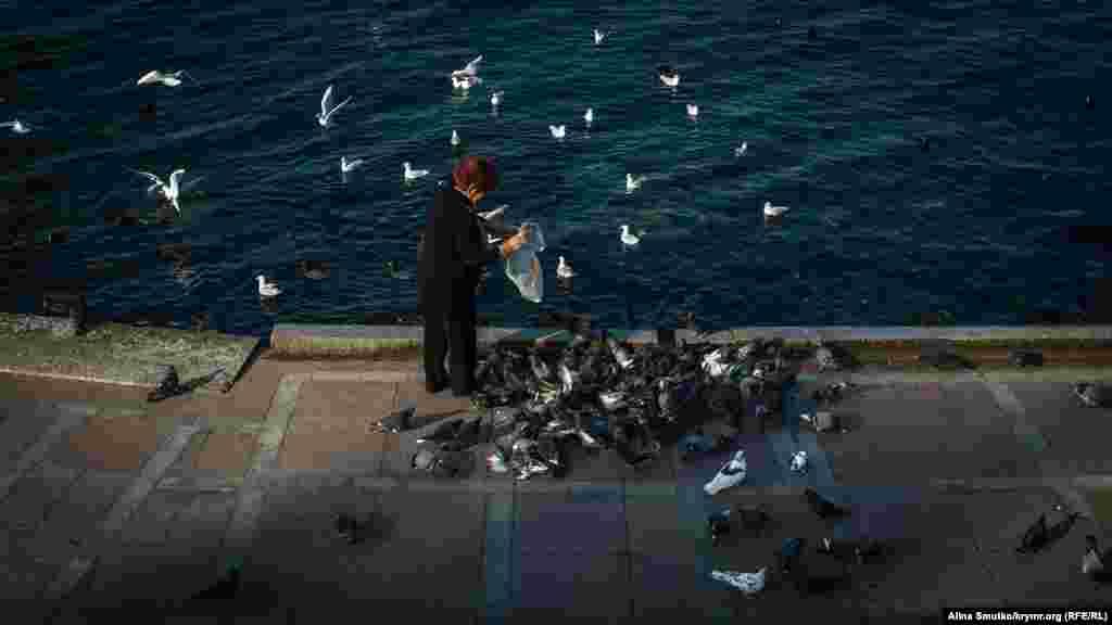 У Севастополі годують чайок і голубів