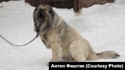 Сторожевой пес – единственный, кто охраняет дом Ознобишиных от приставов