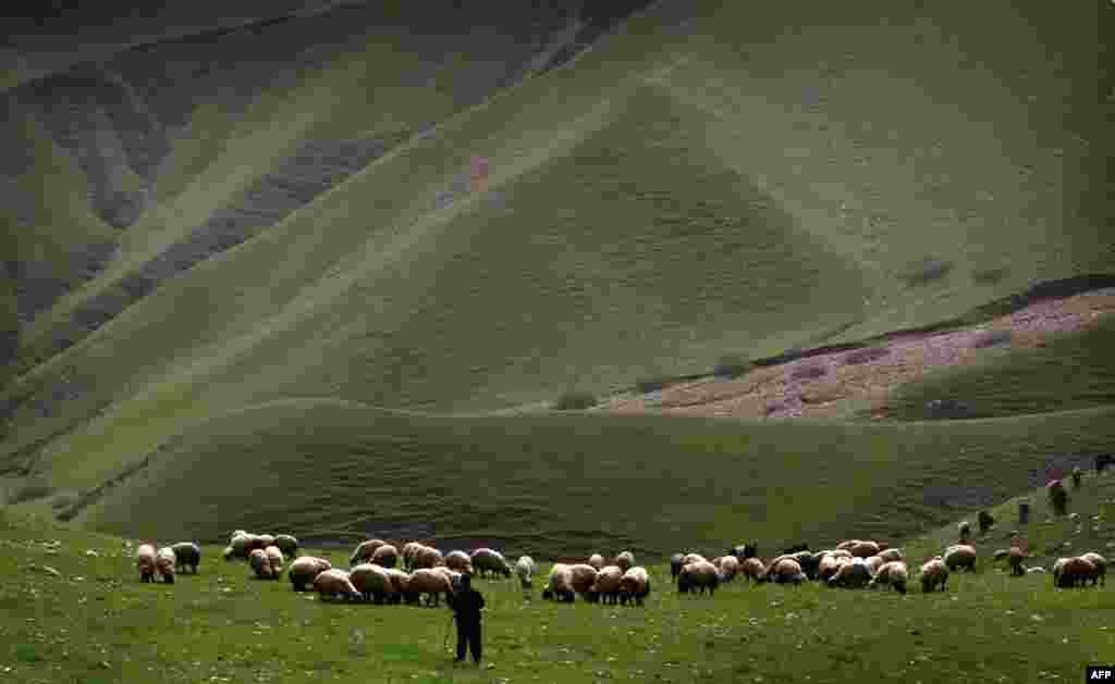 An Iraqi shepherd herds his sheep in the Kurdish town of Aqrah, 500 kilometers north of Baghdad. (AFP/Safin Hamed)