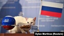 Աքիլլեսը կանխագուշակել է Ռուսաստանի հաղթանակը Սաուդյան Արաբիայի նկատմամբ, 13-ը հունիսի, 2018թ.