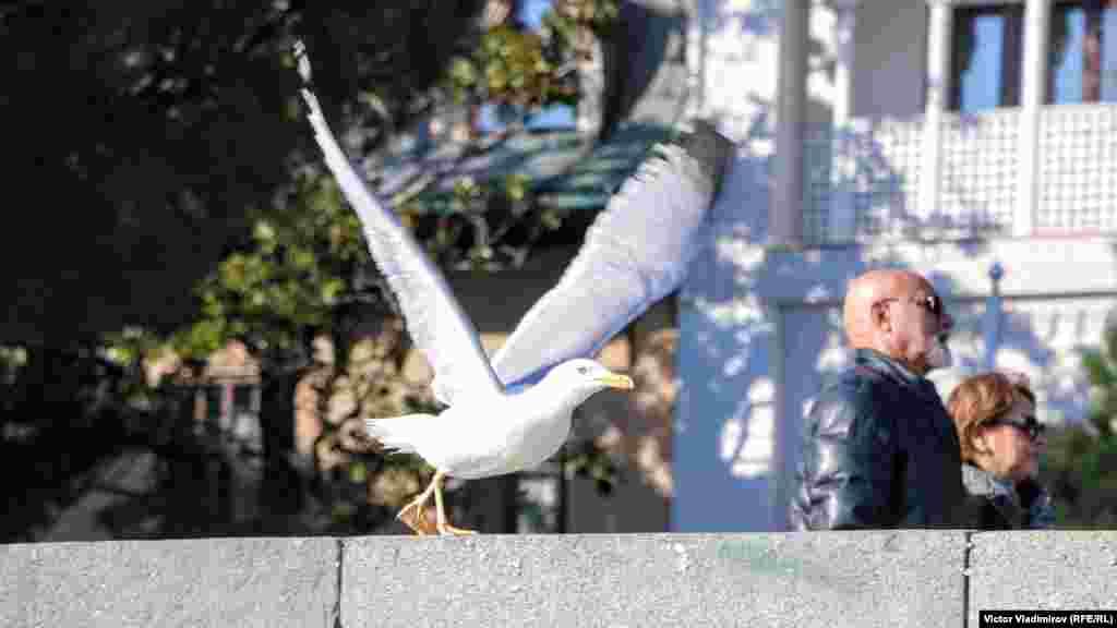 Для Ялты чайки – символ и визитная карточка города