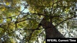 Ореховые леса в Арстанбабе.