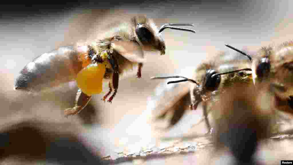 Его цвет, вкус и запах разнится в зависимости от того, какое растение опылили пчелы