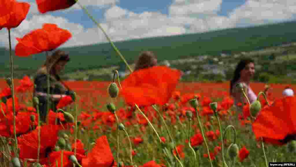 Büyük Süyren (Tankovoye) köyü eñ çoq ziyaret etilgen yer oldı