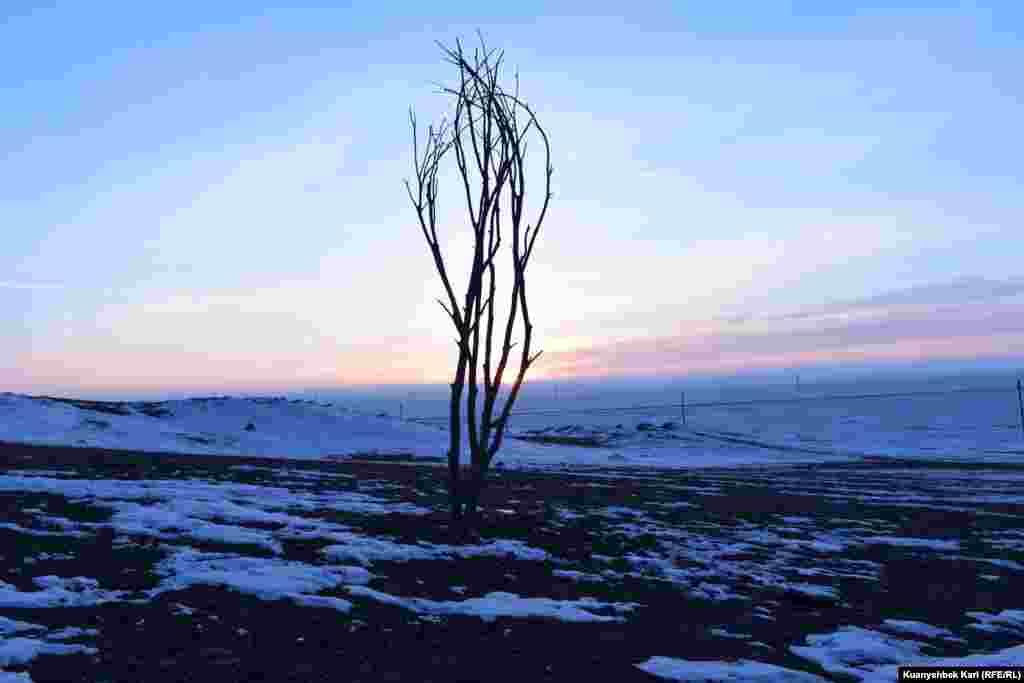 """30 жылдай бұрын """"Невада-Семей"""" антиядролық қозғалысы Семей полигоны құрбандарын еске алу үшін тұрғызған қураған ағаш макетінің қазіргі көрінісі."""