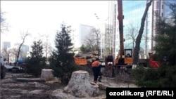 Вырубленные в Ташкенте многолетние деревья.
