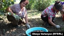 На внутреннем рынке Гальского района цена за кг ореха сейчас составляет 120 рублей, а на закупочных базах Зугдидского района его закупают по цене 150-160 рублей, поэтому населению выгодно вывозить орех в Грузию
