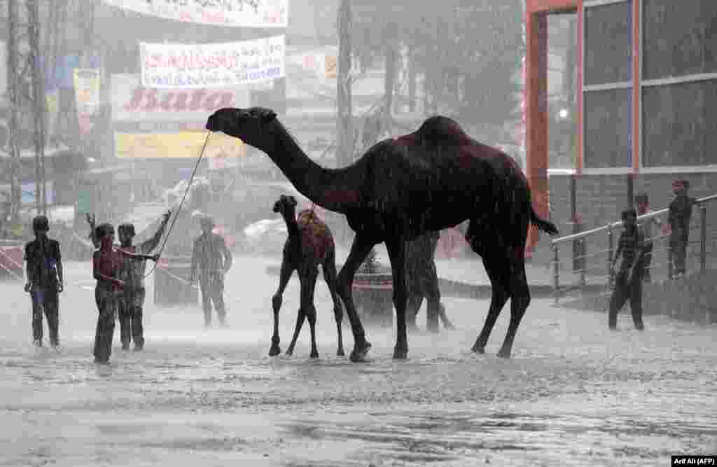 Pakistani children play with camels on a street during heavy monsoon rains in Lahore. (AFP/Arif Ali)