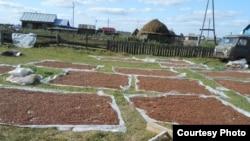 Казанлы авылы халкы эрбет чикләвеген киптерә