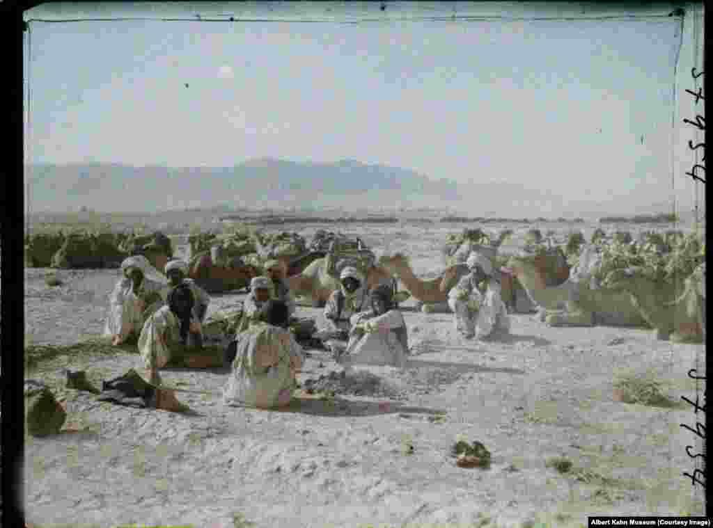 Camel herders in southern Afghanistan.