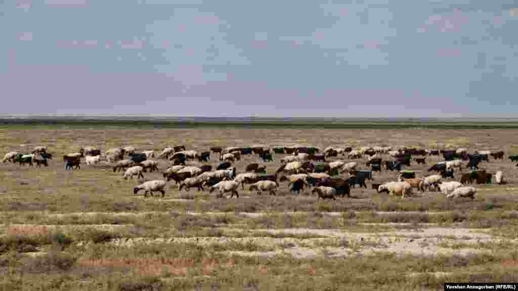 For Annagurban, the sight of a flock of sheep is an instant reminder of his grandfather, an illiterate shepherd. In 1937, he was arrested and sentenced to 10 years in prison by government authorities as a possible threat to the forced collectivization that was under way. He returned after five years.