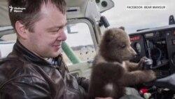 Спасяването на мечката Мансур
