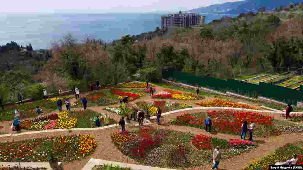 Никитский ботанический сад расположен в поселке Никита, что в границах Большой Ялты