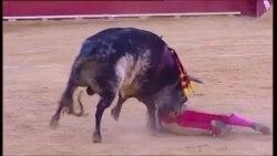 Qəzəbli öküzün matadoru öldürməsi televiziya ilə yayılıb