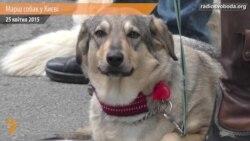 Власники собак у Києві пікетували МВС та Адміністрацію президента
