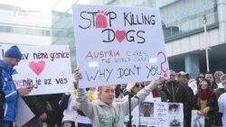 'Zaustavite ubijanje pasa'