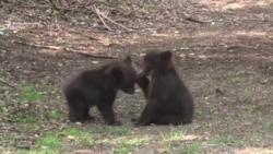 Maša i Brundo na putu povratka u divljinu