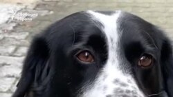 Куче на име Наденица помага на децата да пресичат