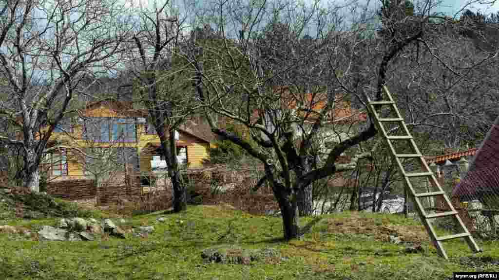 Старый фруктовый сад перед новыми коттеджами