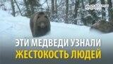 Медведи, пострадавшие от жестокого обращения