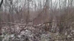 Такую землю предлагают многодетным в Хабаровске