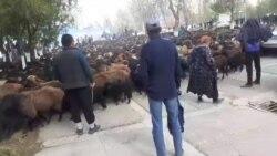 В Нурабаде недовольные жители пригнали стадо овец к зданию хокимията