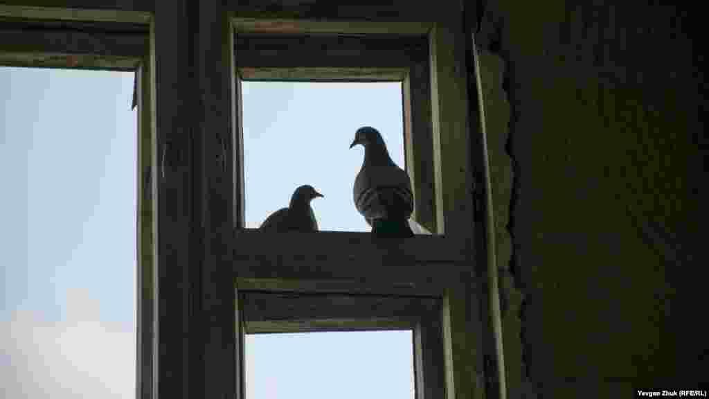 Дикі голуби, які оселилися в будівлі, зовсім не бояться людей