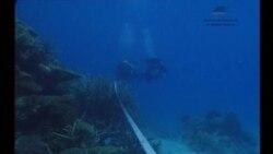 Проблемы Большого Барьерного рифа